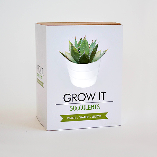 grow it succulent