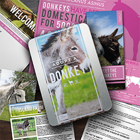 Help neglected donkeys