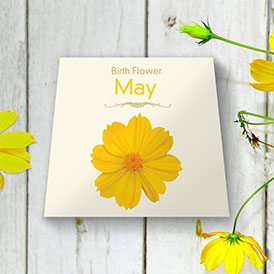 Birth Flowers - May