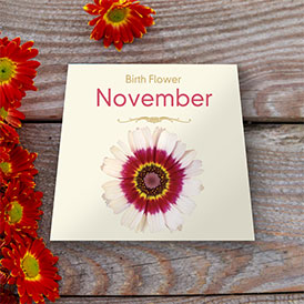 Birth Flowers - November