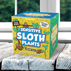 Sensitive Sloth Plants