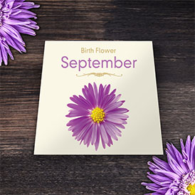 Birth Flowers - September